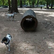 Murray Dog Park in Little Rock, AR