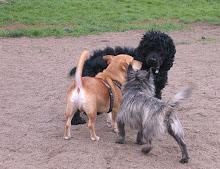 Alameda Small Dog Park in Alameda CA
