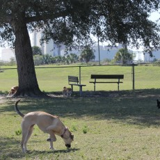 Anclote Gulf Dog Park in Holiday, FL