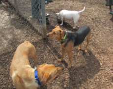 Glenlake Dog Park in Decatur GA