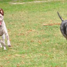 Kenwood Dog Park