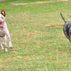 Lake Vista Dog Park