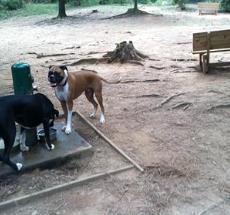 Memorial Park Dog Park Athens GA