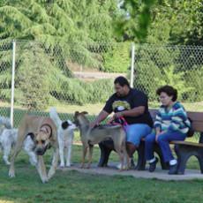 Woodward Park Dog Park in Fresno CA