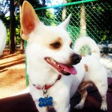 Daffin Park Dog Parks