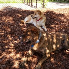 Mason Mill Dog Park in Decatur GA