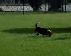 Calcasieu Parish Animal Control Dog Park