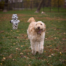 Hasselroth Dog Park in Rock Island Illinois