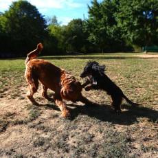 Mehlig Park Dog Park in Kokomo IN
