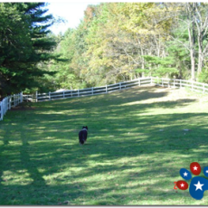 American K9 Country Dog Park in Amherst New Hampshire