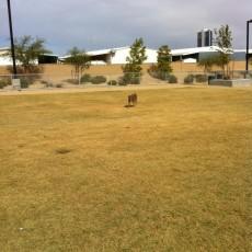 Charlie Frias Park Dog Park in Las Vegas, NV