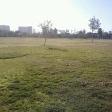 Molasky Family Park Dog Park in Las Vegas, NV