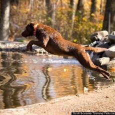 Rocky Top Dog Park in Brunswick Township, NJ