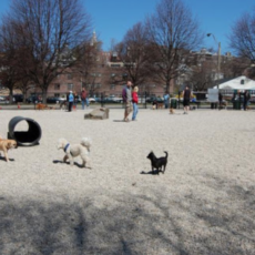 South Boston Bark Park Dog Park in Boston MA