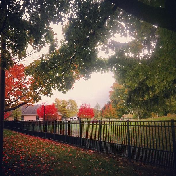 Wheeler Dog Park Columbus Ohio