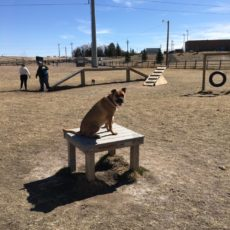 Cheyenne Community Nancy Mockler Dog Park