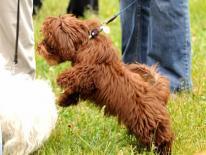 Gage-Eckington Dog Park
