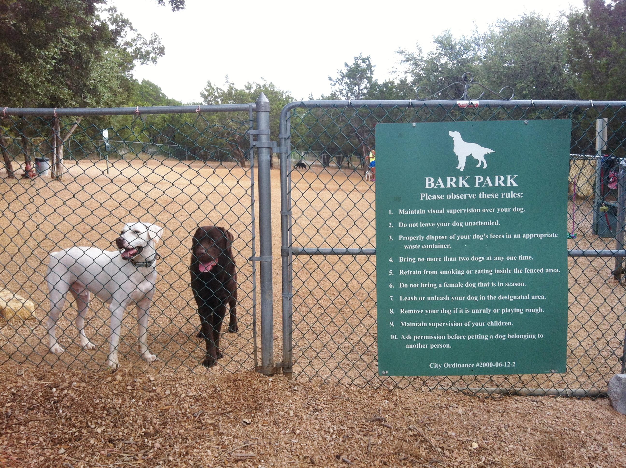 Lakeway Dog Adoption