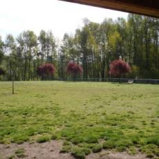Longview Dog Park in Longview WA