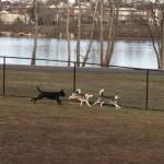 Morrisville Dog Park
