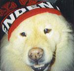Furry Fellas Pet Service LLC
