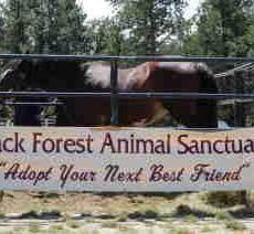 Black Forest Animal Sanctuary