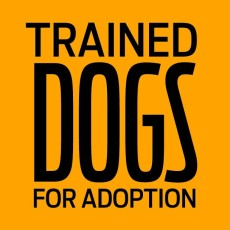 trained dogs for adoption