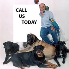 Dog Training by Bob Maida