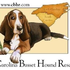 Carolina Basset Hound Rescue