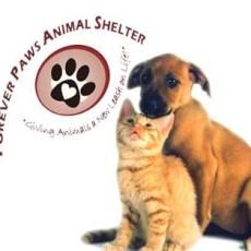 Forever Paws Animal Shelter