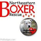 Northeastern Boxer Rescue