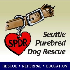 Seattle Purebred Dog Rescue