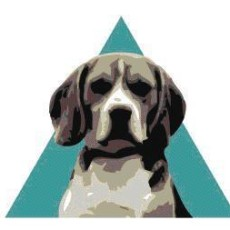 Triangle Beagle Rescue of North Carolina