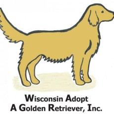 Wisconsin Adopt A Golden Retriever