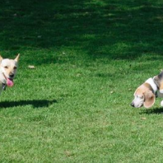 Wisner Dog Run in New Orleans, Louisiana