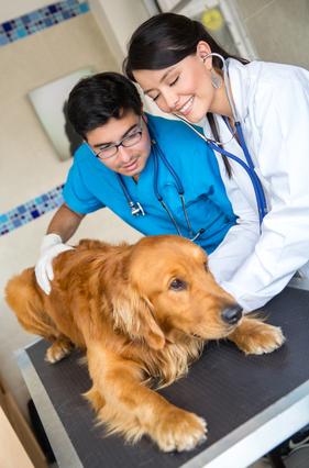 vet or vet tech which best describes your career future