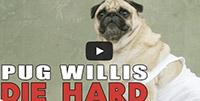 die hard with pugs