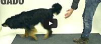 dog magic tricks
