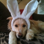Keep Your Dog Safe On Easter – Easter Pet Safety Tips