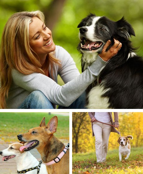 Dog Walking Services Cary Nc