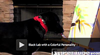 painting black lab