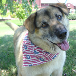 Keeping Your Dog Calm During July 4th Fireworks