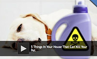 5 Things in Your House That Can Kill Your Pet