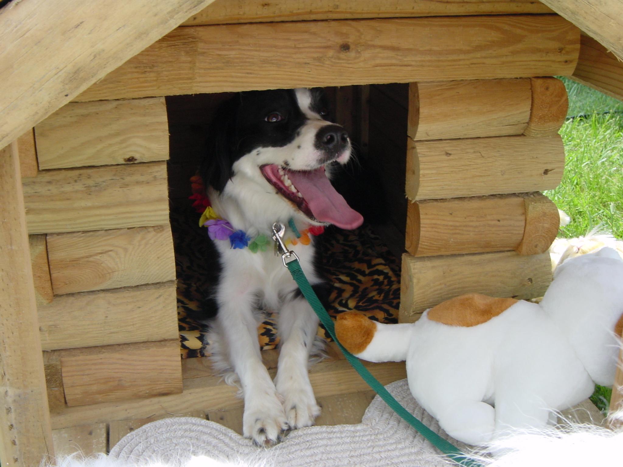 abba in dog house