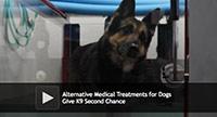 alternative dog medical treatments