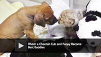cheetah and puppy