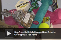 dog friendly hotel perks