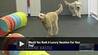 dog luxury vacation