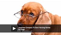 dog nursing home