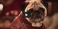 pugs of thrones video